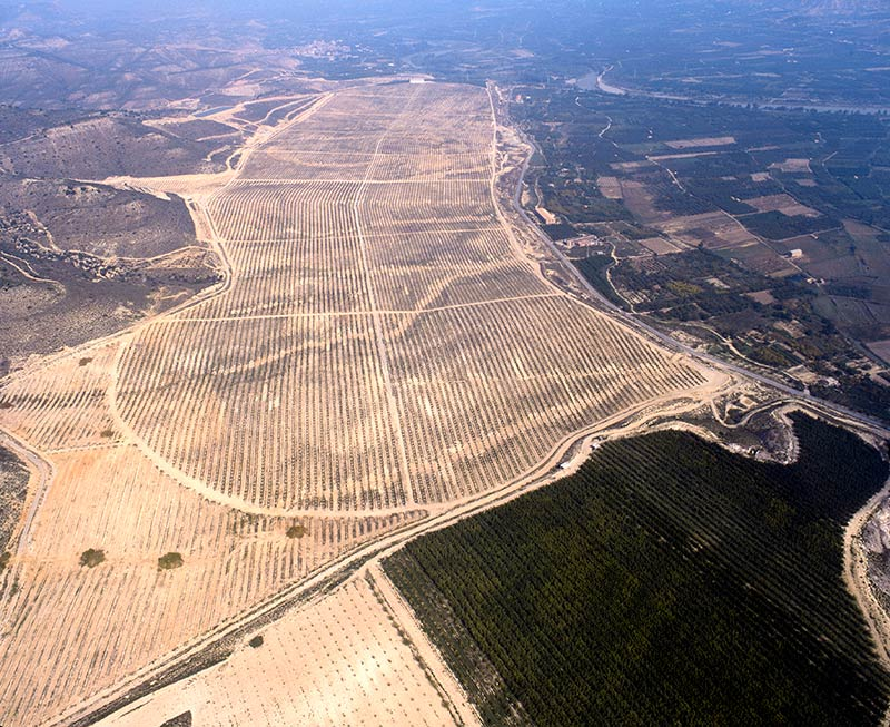 Fruits Plantation. Grupo Venso.