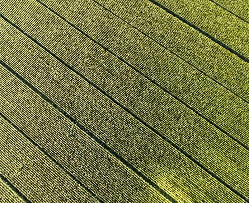 Cereals Fields. Grupo Venso.